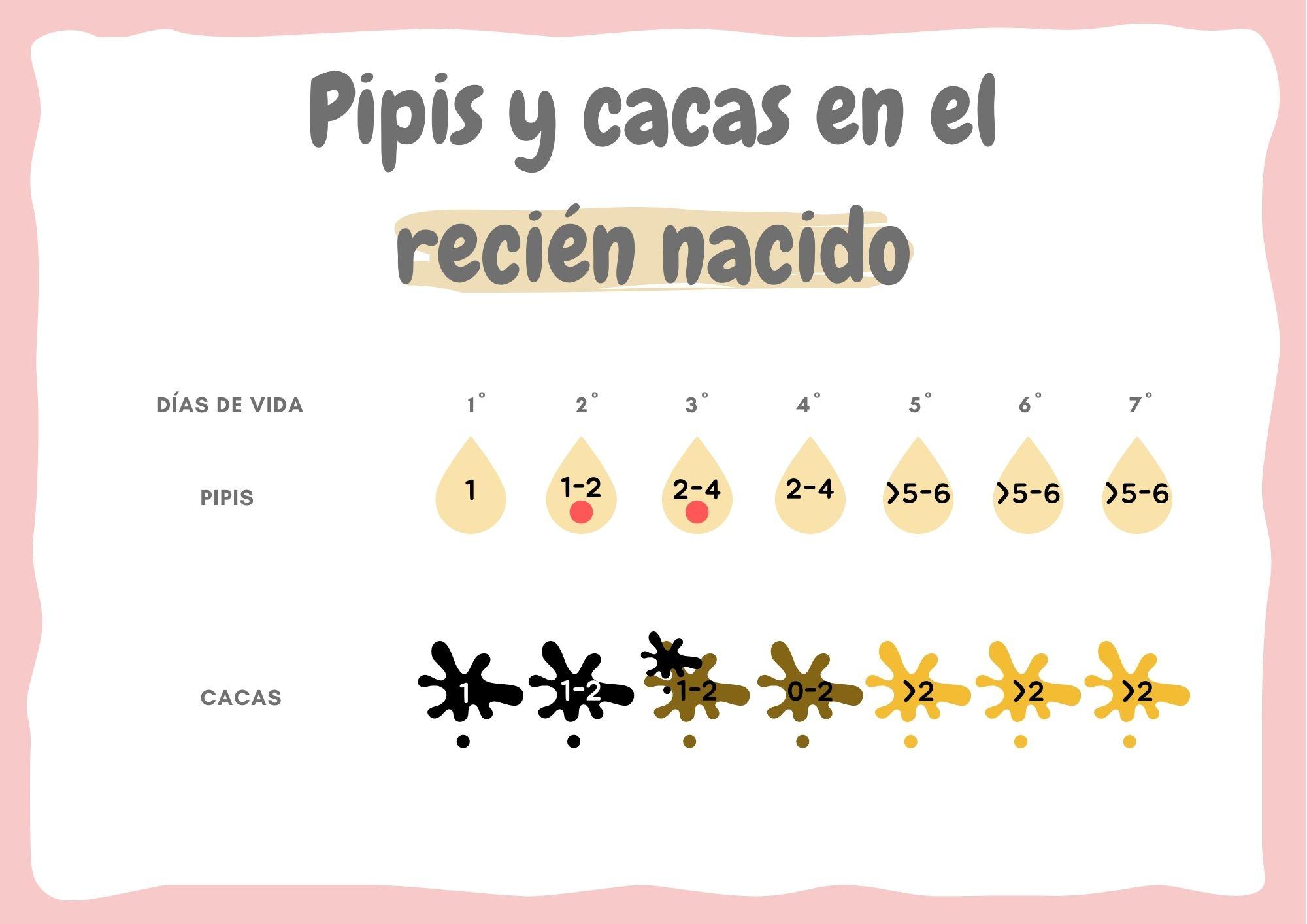 PIPIS Y CACAS EN EL RECIÉN NACIDO